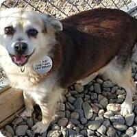 Adopt A Pet :: Mama **In a foster home** - Breinigsville, PA