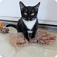 Adopt A Pet :: *Teddy - Winder, GA