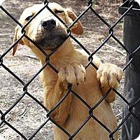 Adopt A Pet :: Timmy - Vista, CA