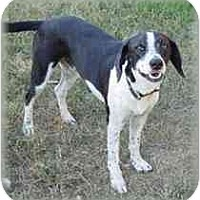 Adopt A Pet :: Arthur - Carencro, LA