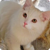 Adopt A Pet :: Beau - Fayetteville, TN