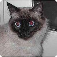 Adopt A Pet :: Tiki - Davis, CA