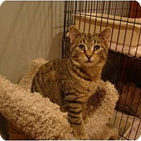 Adopt A Pet :: Hector--PETSMART - Muncie, IN