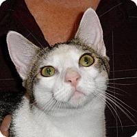 Adopt A Pet :: Anna - Watkinsville, GA