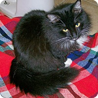 Adopt A Pet :: Tarzana - Scottsdale, AZ