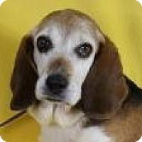 Adopt A Pet :: June Bug - Minneapolis, MN