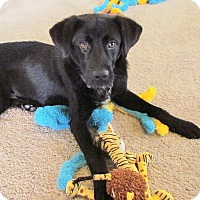 Adopt A Pet :: Harley - Knoxville, TN