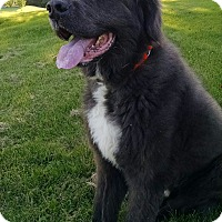 Adopt A Pet :: Zeke - Courtesy Post - Rochester/Buffalo, NY