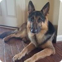 Adopt A Pet :: Heath - Houston, TX