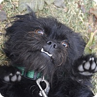 Adopt A Pet :: Gino - Meridian, ID