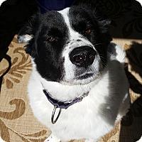 Adopt A Pet :: Helix - All Cities, SC