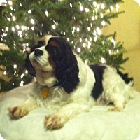 Adopt A Pet :: Alyce - Mount Gretna, PA