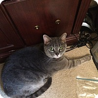 Adopt A Pet :: Diamond_Courtesy Post - Columbia, MD