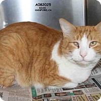 Adopt A Pet :: *FRITZ - Hanford, CA