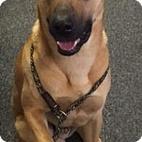 Adopt A Pet :: Drew - Waycross, GA