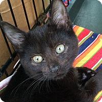 Adopt A Pet :: Thelma - Brooklyn, NY
