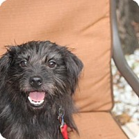 Adopt A Pet :: Sully - tampa, FL