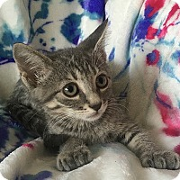 Adopt A Pet :: Angelica - Tampa, FL