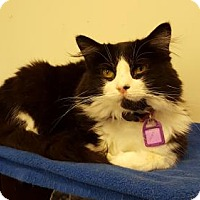 Adopt A Pet :: Georgette - Indianapolis, IN