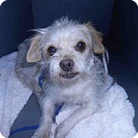 Adopt A Pet :: A581510 - Long Beach, CA