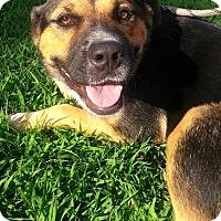 Adopt A Pet :: Amber - Union City, TN