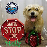 Adopt A Pet :: Molly - Arcadia, FL