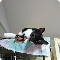 Adopt A Pet :: Ash - Lindsay, ON