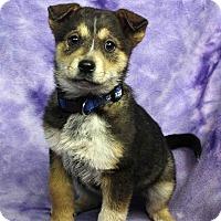 Adopt A Pet :: ELMSLEY - Westminster, CO