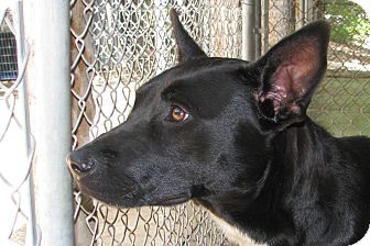 Shepherd (Unknown Type) Mix Dog for adoption in Ruidoso, New Mexico - Jenny