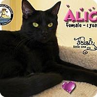 Adopt A Pet :: Alice - Davenport, IA
