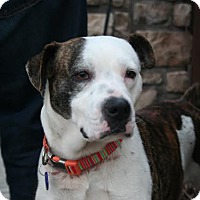 Adopt A Pet :: Harvey - Akron, OH