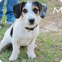 Adopt A Pet :: Mo - Minneola, FL