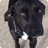 Adopt A Pet :: Darrell - Sparta, NJ