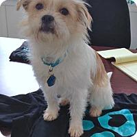 Adopt A Pet :: Fancy - Kimberton, PA