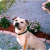 Adopt A Pet :: Tone - Gainesboro, TN