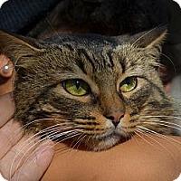 Adopt A Pet :: Leo - Brooklyn, NY