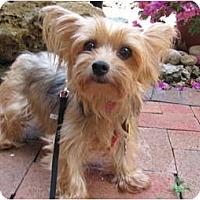Adopt A Pet :: Nika - Miami, FL