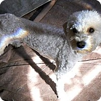 Adopt A Pet :: Frosty - dewey, AZ
