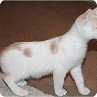 Adopt A Pet :: Luigi - Modesto, CA