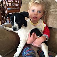 Adopt A Pet :: Cady AD 01-30-16 - Preston, CT