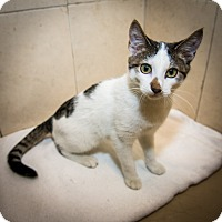 Adopt A Pet :: French Toast - New York, NY