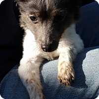 Adopt A Pet :: HOPE - Gustine, CA