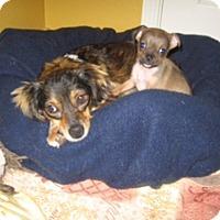 Adopt A Pet :: Molly - Rockaway, NJ