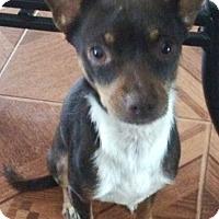 Adopt A Pet :: Brady - Orlando, FL