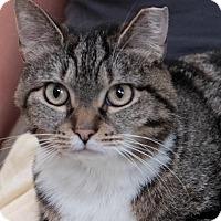 Adopt A Pet :: Ava - Brooklyn, NY