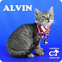 Adopt A Pet :: Alvin - Carencro, LA
