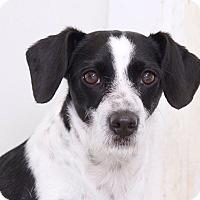 Adopt A Pet :: Rodeo - Sudbury, MA