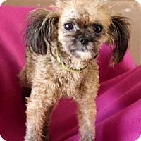 Adopt A Pet :: Sugar - Chester Springs, PA