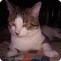 Adopt A Pet :: Simon - Acushnet, MA