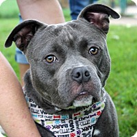 Adopt A Pet :: Detective Vince Magnotta - Troy, MI